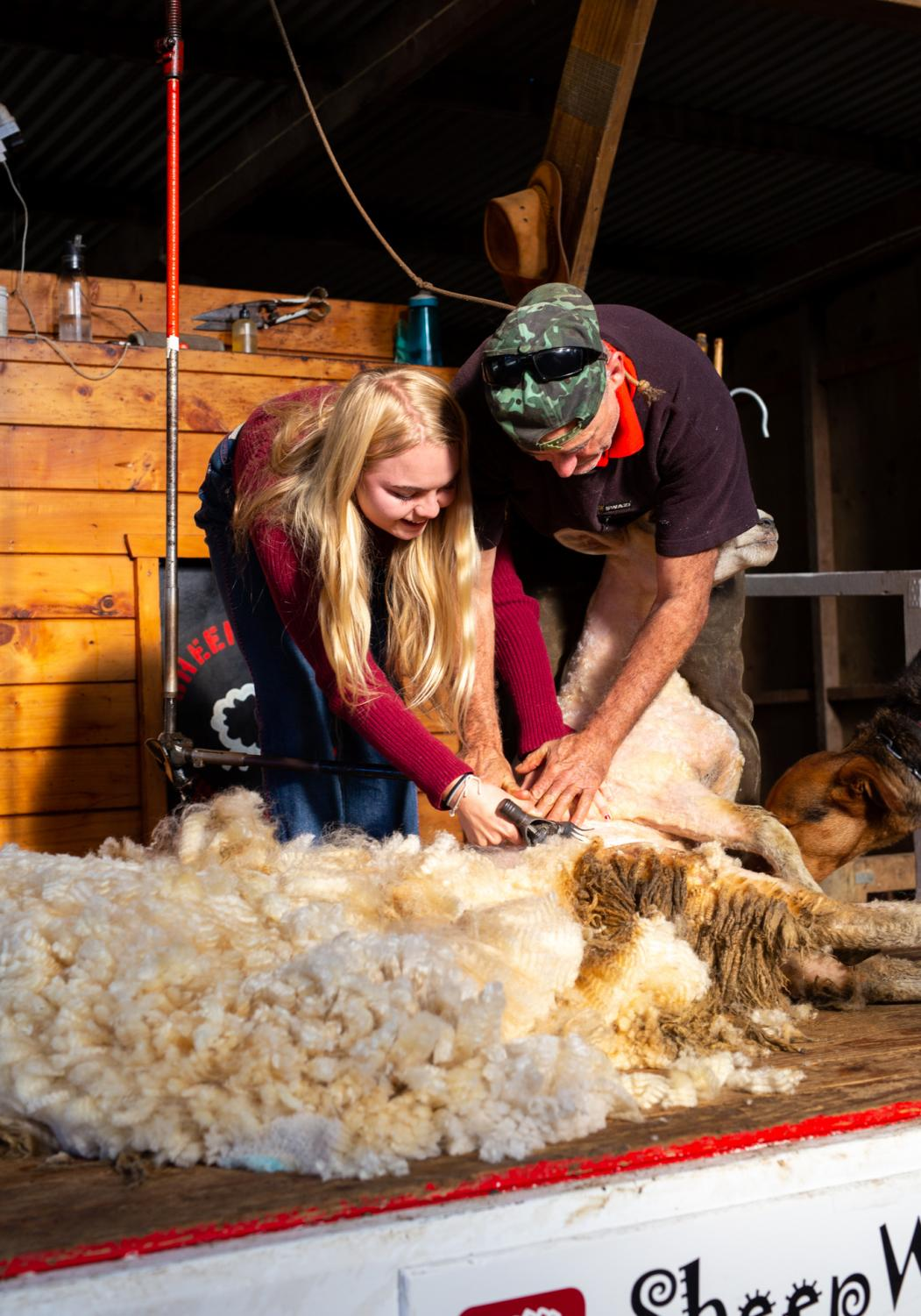 SHEAR+HAPPINESS%3A+Senior+Ava+Walters+shears+a+sheep+at+Sheep+World+in+the+New+Zealand+countryside%2C+Dome+Valley+outside+of+Auckland+on+July+10.+%E2%80%9CFrom+the+moment+we+sheared+the+sheep%2C+I+knew+this+trip+was+going+to+be+amazing+and+educational%2C%E2%80%9D+Marsh+said.
