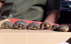 Religion teacher continues family hobby of tortoise breeding