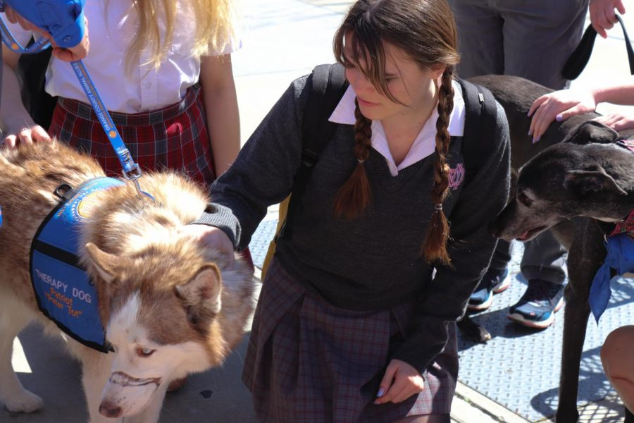 Therapy dogs to come more often to relieve student stress